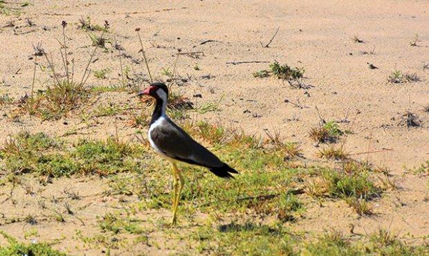 Detroves Travels explores Wilpattu National Park
